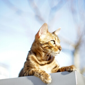 Cat outside in the sun