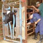 Large animal medicine
