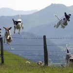 dogs jumping fence