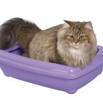 Cat in litter pan
