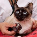 vet-and-cat