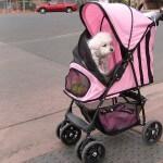 Poodle stroller