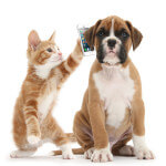 DogCatAndPhone900