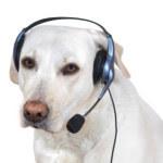 dog_phone