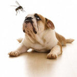 Dog with mosquito