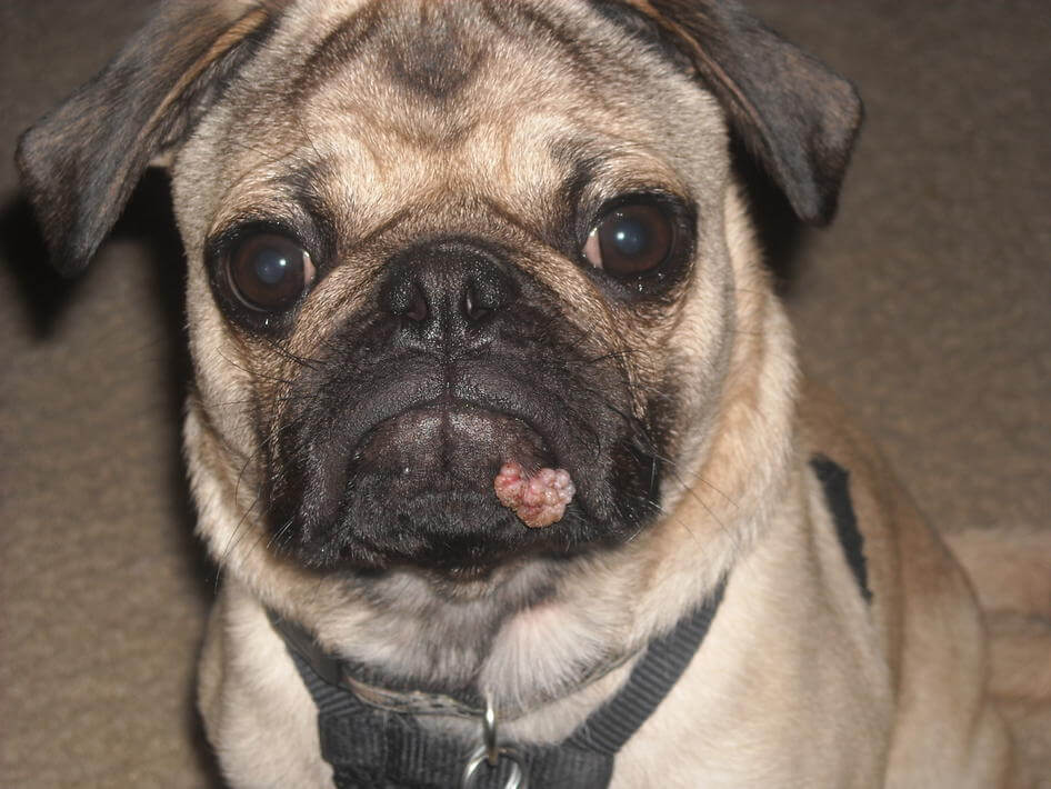Your Dog Didn T Kiss A Toad Newtown Square Veterinary