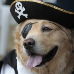 pirate-dog