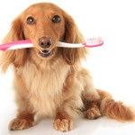 Dachs-toothbrush