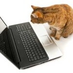 cat_and_computer