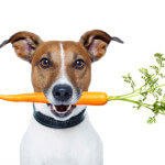jrt-with-carrot