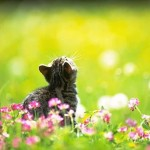 Cute-Cat-Spring-Wallpaper