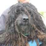 Matted-dog