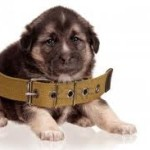 Puppy with a big collar