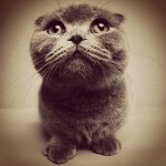 angry-cat-