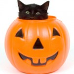 medium_cat_in_pumpkin