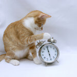 Cat-and-Clock