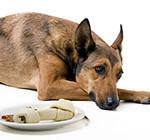 Refuse food