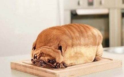 Overweight dog looks like a loaf of bread