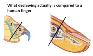 finger_2