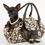Dog in a purse
