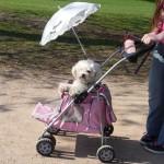 Dog in stroller