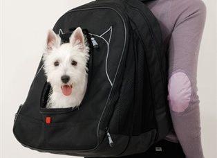 dog-laptop-bag1