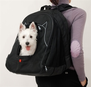 Dog in a backpack