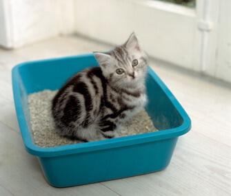 Kitten in a litter pan