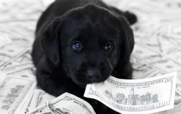 Puppy eating money