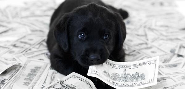 Puppy eating money