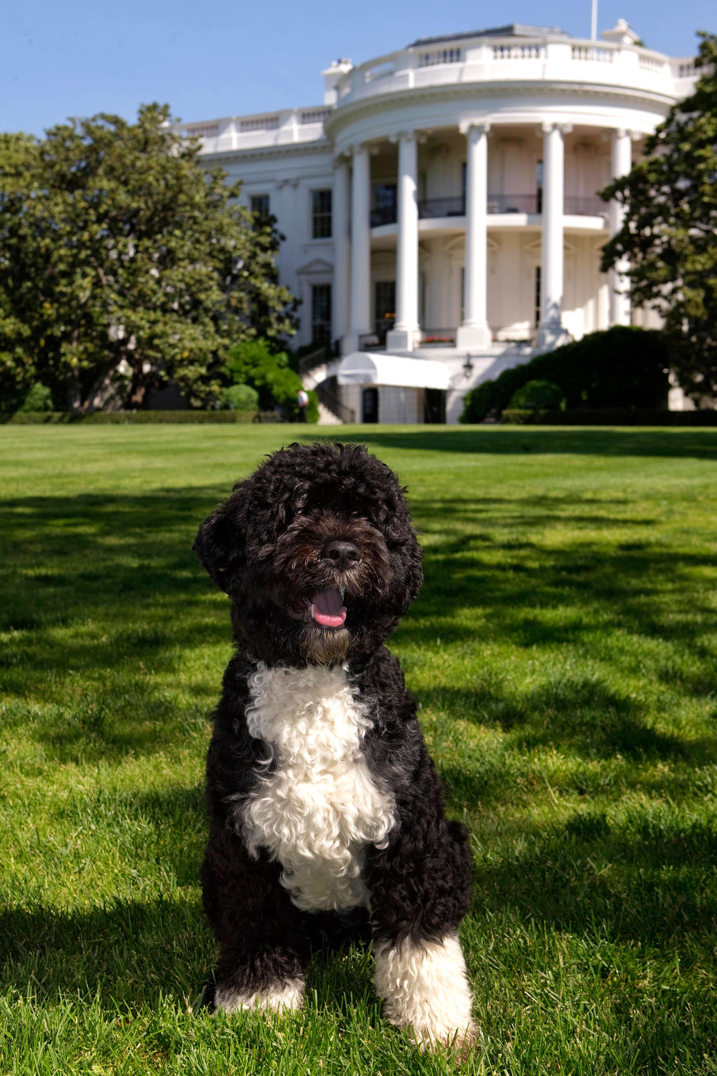 Bo Obama at the White House