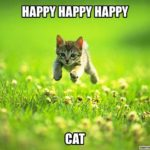 Happy-Cat-2