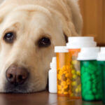 pet-medications