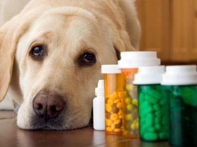 Dog with pill bottles