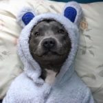 cute-pittie