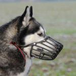 muzzle-2
